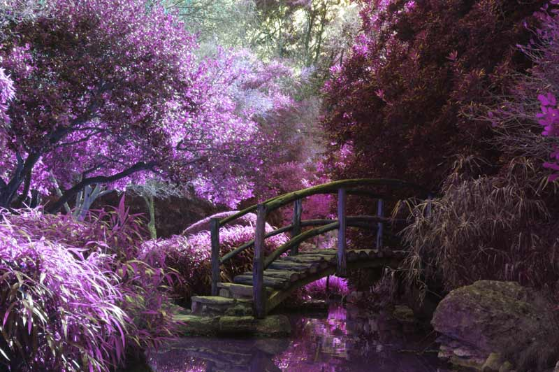 Bridge in flower garden representing overcoming psychological problems